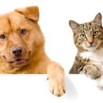 Oletko koira- vai kissaihminen? Tee testi!