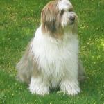 Blogihaaste: pystytkö olla sinuttelematta koiraasi kuukauden ajan?