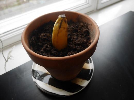 BananPeak4