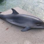 Nyt puhuvat delfiinit
