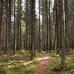 Hallitukselta tarkennus: Työttömien haastatteluja aletaan tehdä metsässä
