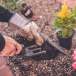Tuore tutkimus: Kasvit toivoisivat itse asiassa että olisit välillä hiljaa